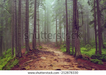 Road through the misty forest in Carpathian Mountains, Ukraine - stock photo