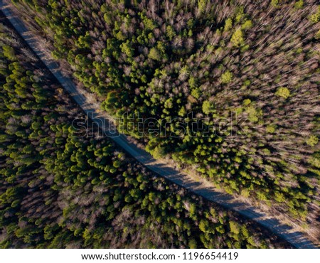 Road through the taiga forest. Oil deposit. Oil production. Sunset on the Vasyugan swamp. Nature landscape from aerial view. Off road transportation. Siberia, Russia.