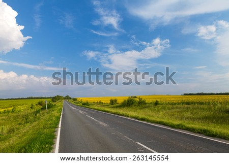 Road through the yellow sunflower field in sunny day - stock photo