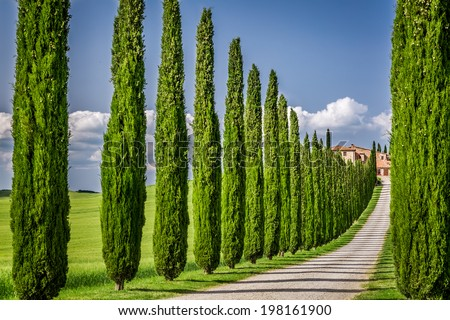 Road to agritourism in Tuscany with cypresses - stock photo