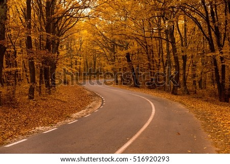 Road to autum
