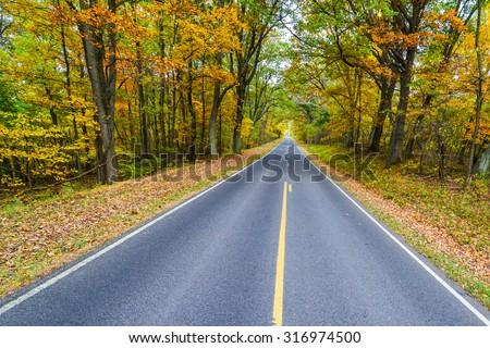 Road to Autumn forest - Shenandoah National Park, Virginia - USA - stock photo