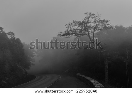 Road to foggy forest in Shenandoah National park with Autumn colors  - stock photo