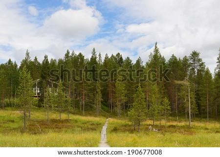 Road to house through swamp  - stock photo