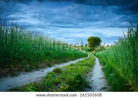 Road to the lonely tree - stock photo