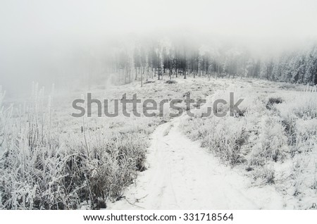 road toward forest in winter minimal landscape with fog - stock photo