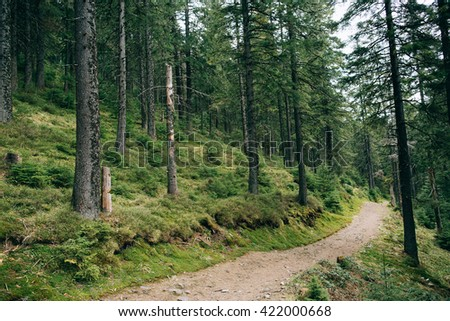 Road trek into the mountain green forest  for hiking