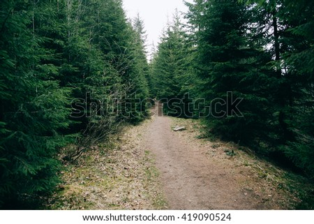 Road trek into the mountains for hiking. Green Forest.  Misty mountain pine forest  landscape.  - stock photo