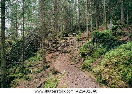 Road trek into the mountains for hiking. Green Forest. Misty mountain pine forest landscape - stock photo