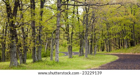 Road turning among trees with light green leaves in the spring forest of the Shenandoah National Park, Virginia, USA.
