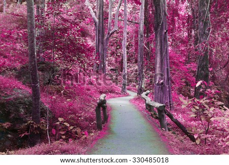 road way to purple forest,  imagination, landscape of tree and forest ,Beautiful brown colored foggy forest trees with forest road. - stock photo