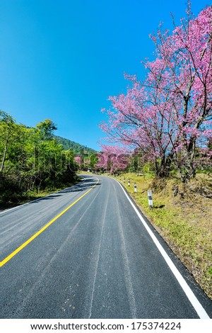 Road with beautiful flowers by the wayside. - stock photo