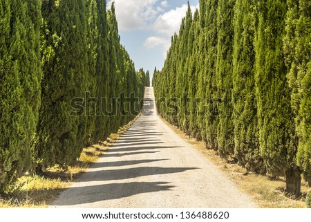 Road with cypresses near Volterra (Pisa, Tuscany, Italy)