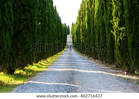 Road with cypresses near Volterra, Tuscany-Italy