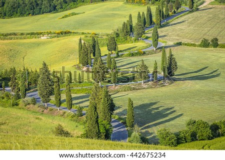 road with cypresses trees in summer day in Tuscany in Italy - stock photo