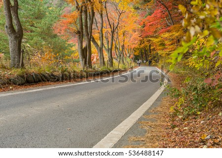 road with red yellow and green colorful maple tree at Kawaguchiko Japan