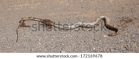 Roadkill - Horned Adder snake on a gravel road in Namibia - stock photo