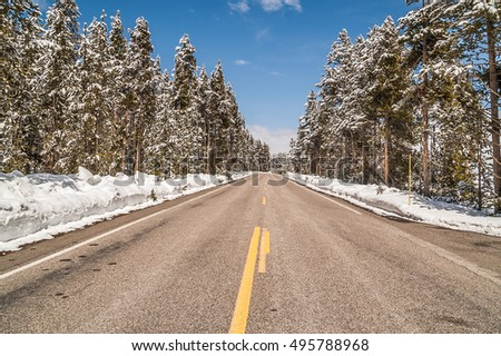 Roads are plowed, sun is out, the sky is blue. and there is snow on the trees.  Welcome to Yellowstone National Park in May!