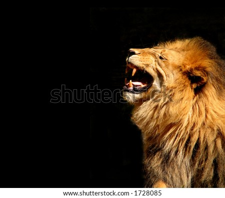 Roaring Lion-Horizontal Orientation