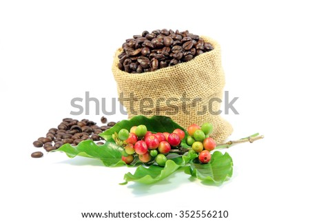 Roasted coffee beans in burlap sack with red and green coffee beans berries. - stock photo