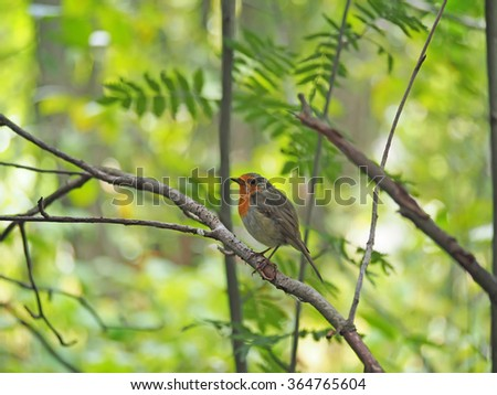 robin in the forest - stock photo