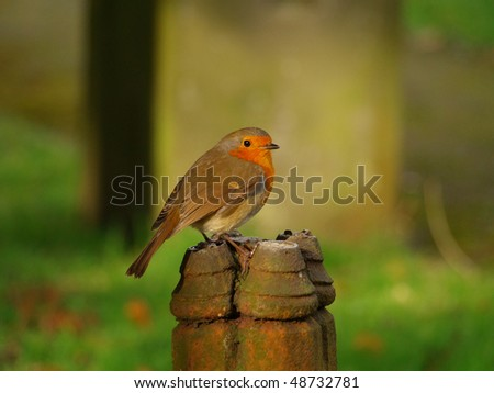Robin on a post - stock photo