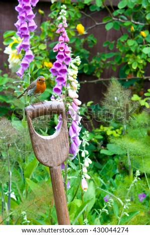 Robin perched on a garden fork handle.  - stock photo