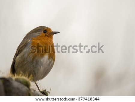 Robin Red Breast (Erithacus rubecula) spotted in National Botanic Gardens, Dublin