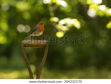 Robin red breast sitting on garden spade - stock photo