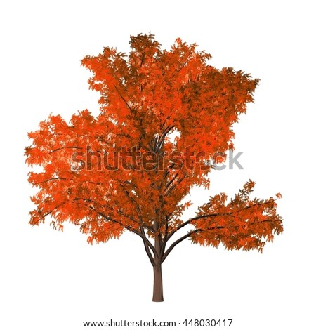 Robinia Tree Isolated on white background, 3D Illustration.