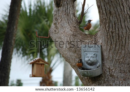 Robins enjoying their birdfeeders and bath - stock photo