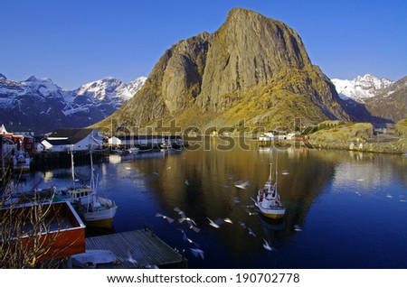 robuer on Lofoten Islands