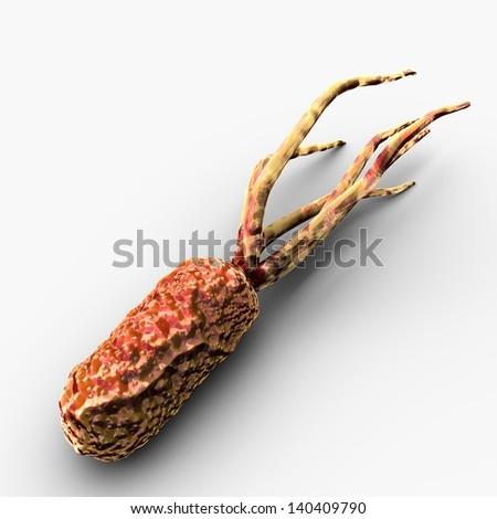 Rochalimaea Bacteria - stock photo