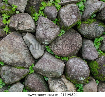 rock background with ivy - stock photo