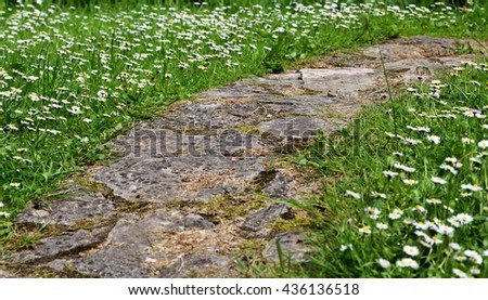 Rock foot path lined with blooming white daisy flowers in Spring - stock photo