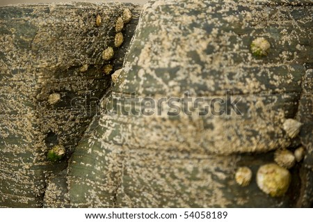 Rock formation in the sand on sea shore with copy space.