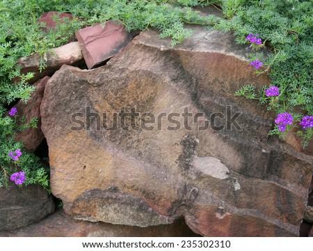 rock garden with flowers - stock photo