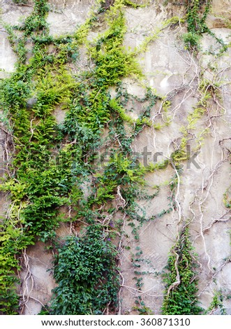 rock wall with plants - stock photo