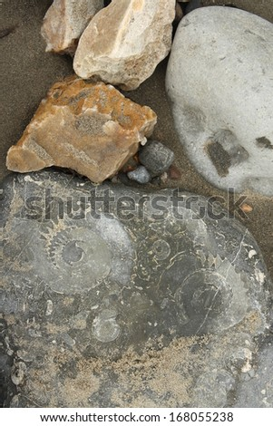 rock with embeded fossils in Lyme Regis, UK - stock photo