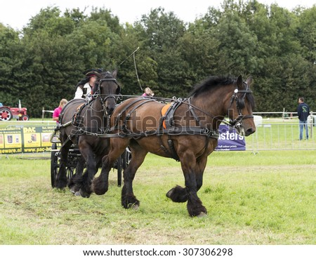 ROCKANJE, NETHERLANDS - AUGUST 18, 2015: Unknown people participate in the power horse competition in Rockanje on August 18 2015. This competition is for international points