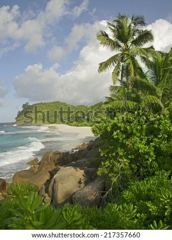 Rocks and palm trees along shore, Police Bay, Mahe', Seychelles - stock photo