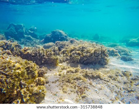 Rocks And Seaweeds On The Sea Floor In Sardinia, Italy
