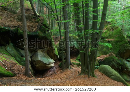 Rocks covered with moss in the forest. Spring landscape - stock photo