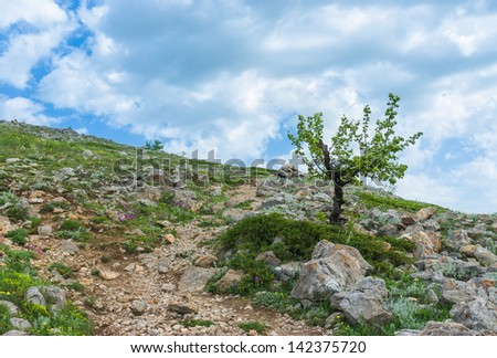 Rocks, wild flowers and lonely pear-trees - spring in Crimean mountains at a height above 1000 metres.