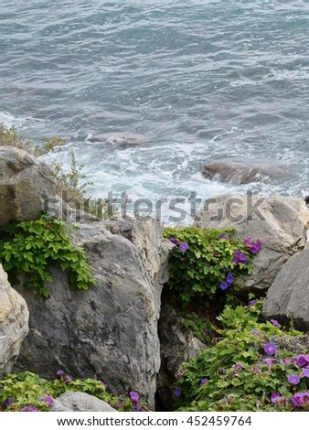 rocks with plants and flowers near the sea in Sanremo in Italy