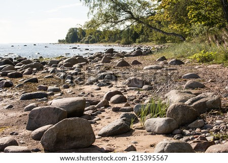 rocky beach in the baltic sea with plants and skyline