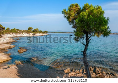 Rocky beach with pine trees