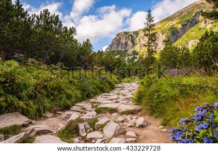 Rocky Hiking Trail in the Mountains on Sunny Day. Mlynicka Valley, High Tatra, Slovakia. - stock photo