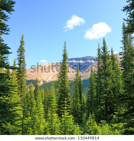 Rocky mountains covered with coniferous wood on a sky background. Jasper, Canada - stock photo