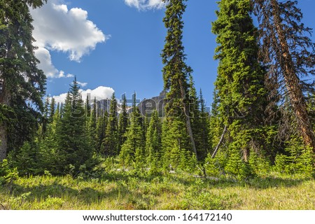Rocky mountains green forest landscape. Banff National Park (Alberta, Canada)  - stock photo